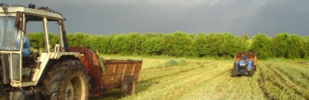 Fattoria della piana ilmangiaweb for Grandi planimetrie della fattoria